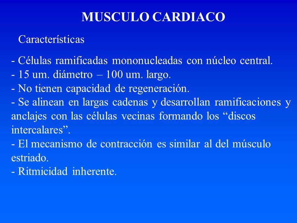 MUSCULO CARDIACO Características