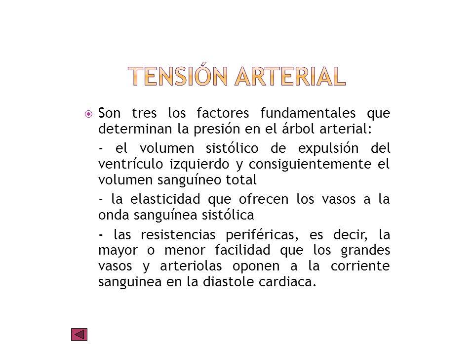 Tensión arterialSon tres los factores fundamentales que determinan la presión en el árbol arterial: