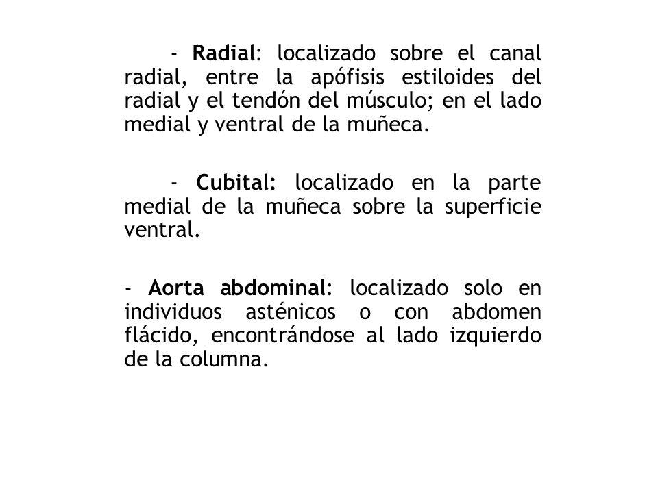 - Radial: localizado sobre el canal radial, entre la apófisis estiloides del radial y el tendón del músculo; en el lado medial y ventral de la muñeca.