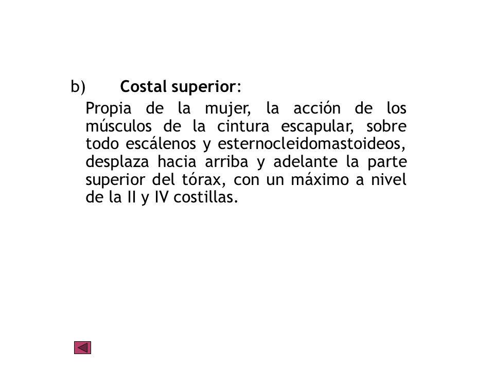 b) Costal superior: