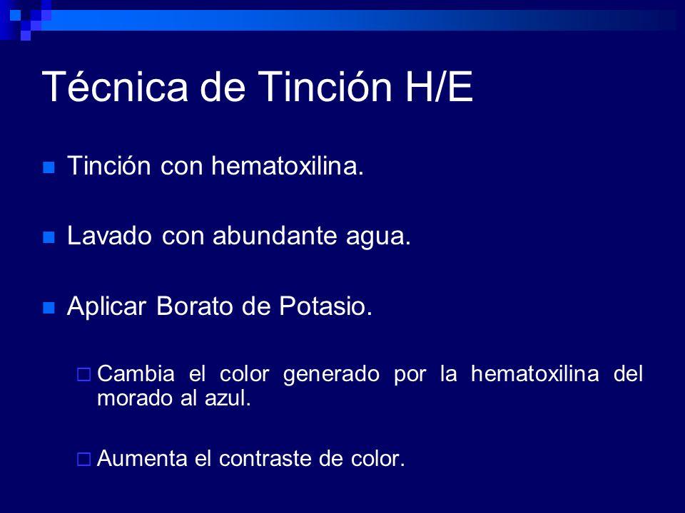 Técnica de Tinción H/E Tinción con hematoxilina.