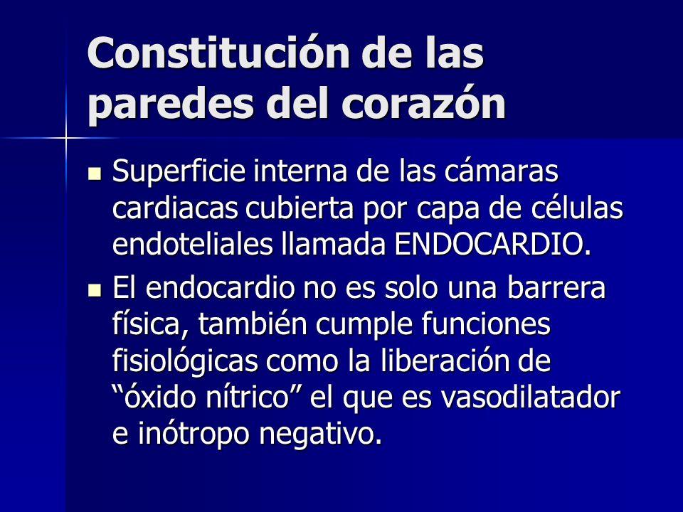 Constitución de las paredes del corazón