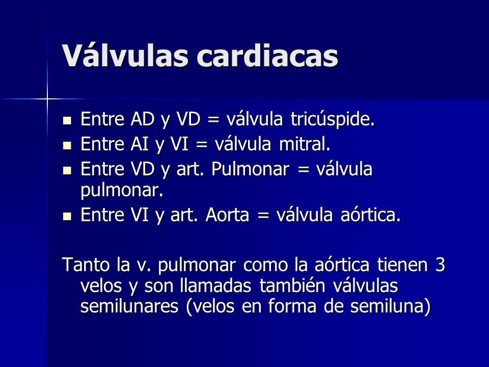 Válvulas cardiacas Entre AD y VD = válvula tricúspide.