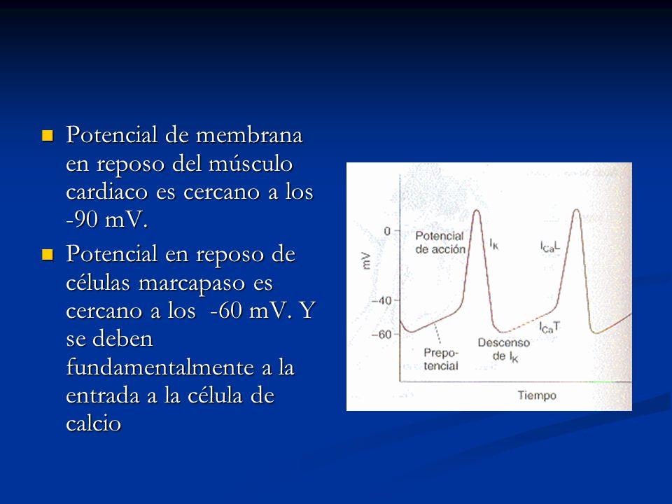 Potencial de membrana en reposo del músculo cardiaco es cercano a los -90 mV.