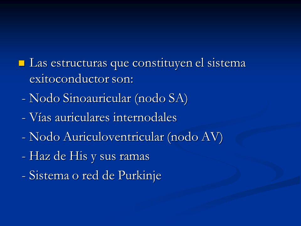 Las estructuras que constituyen el sistema exitoconductor son: