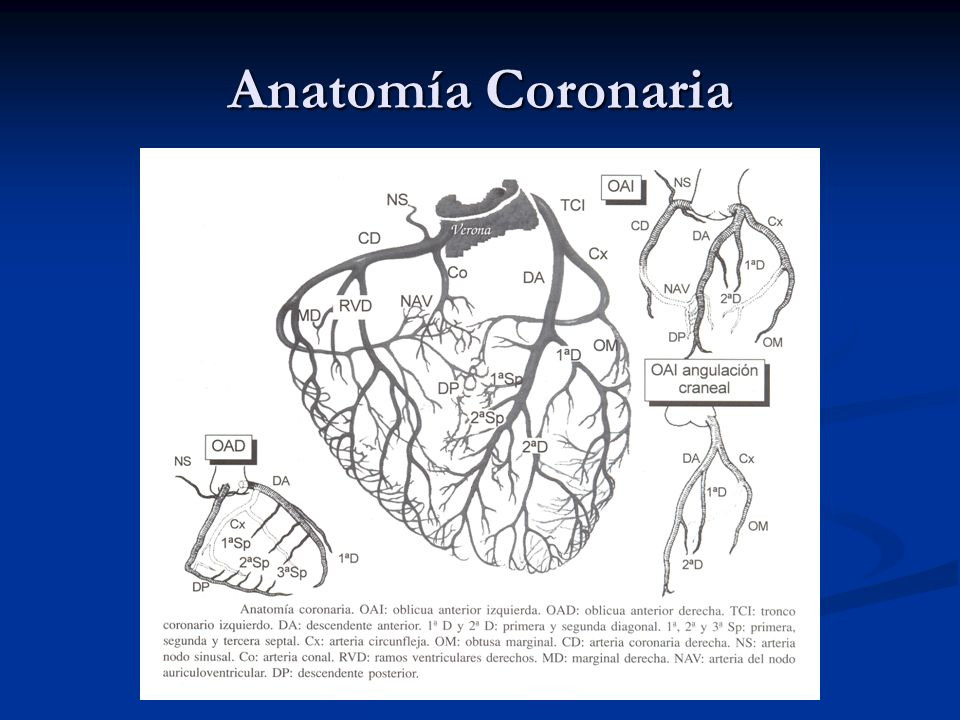Anatomía Coronaria