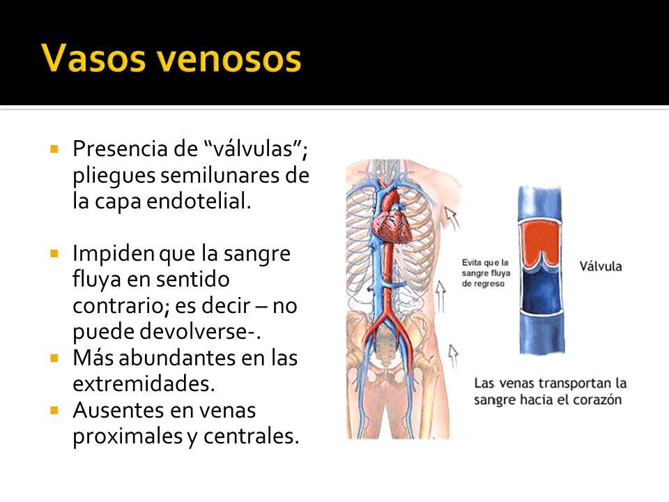 Vasos venosos Presencia de válvulas ; pliegues semilunares de la capa endotelial.