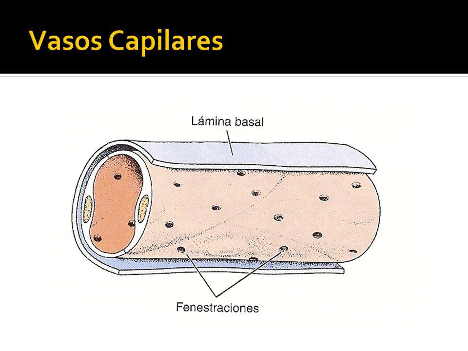 Vasos Capilares