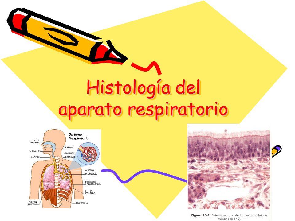 Histología del aparato respiratorio - ppt video online descargar
