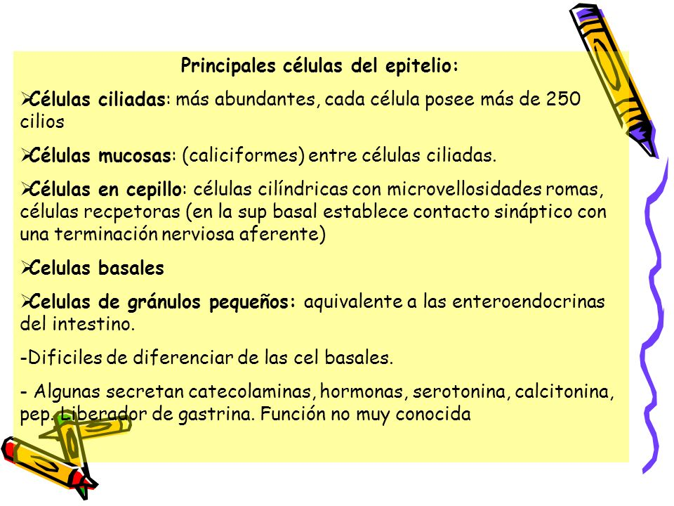 Principales células del epitelio: