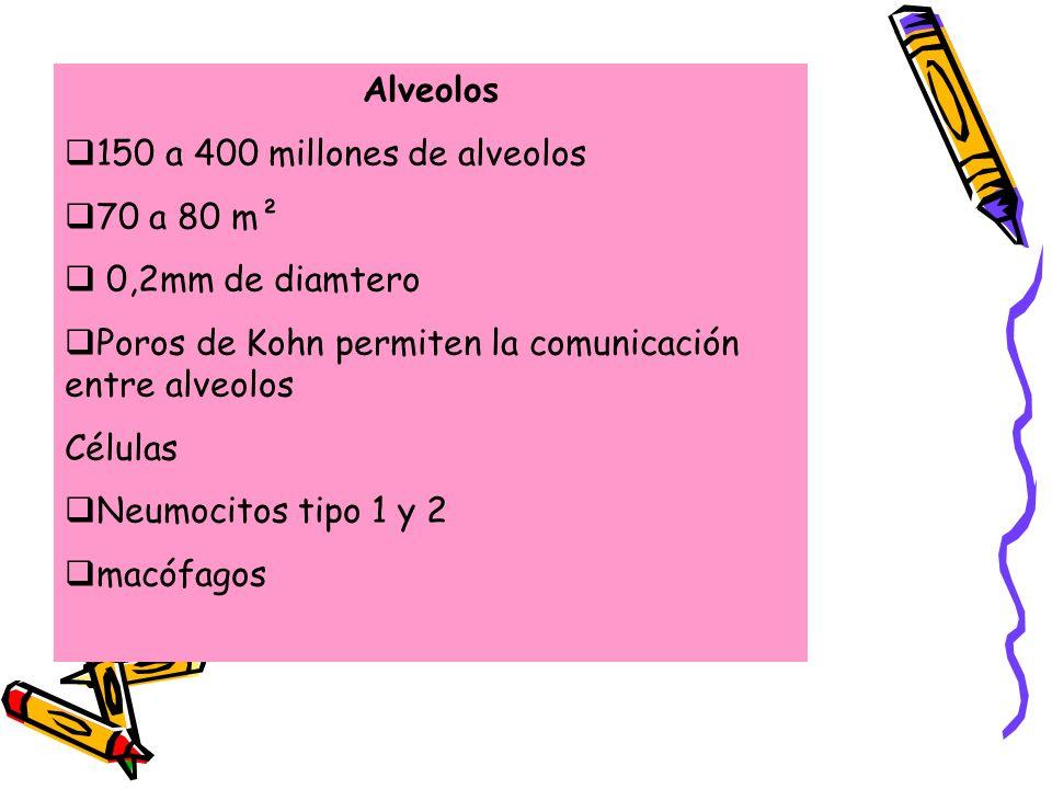 Alveolos 150 a 400 millones de alveolos. 70 a 80 m². 0,2mm de diamtero. Poros de Kohn permiten la comunicación entre alveolos.