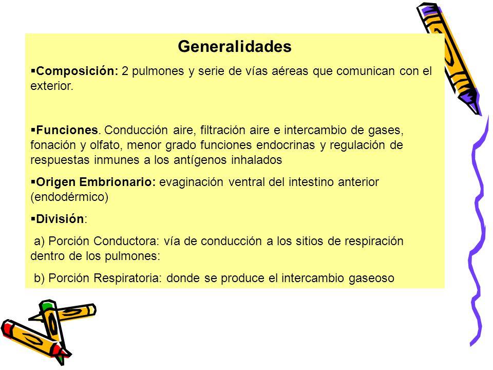 GeneralidadesComposición: 2 pulmones y serie de vías aéreas que comunican con el exterior.