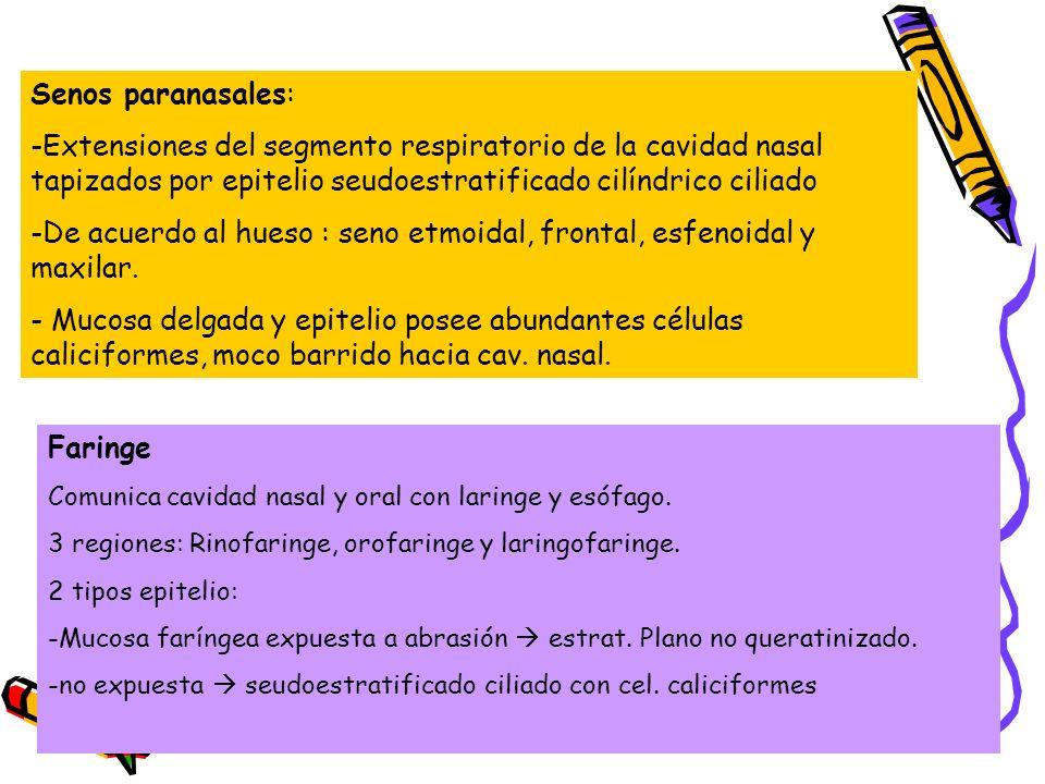 De acuerdo al hueso : seno etmoidal, frontal, esfenoidal y maxilar.