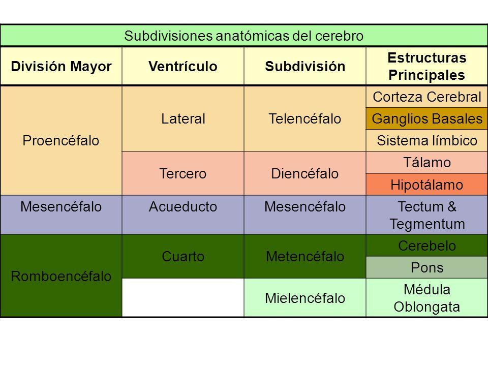 Estructuras Principales