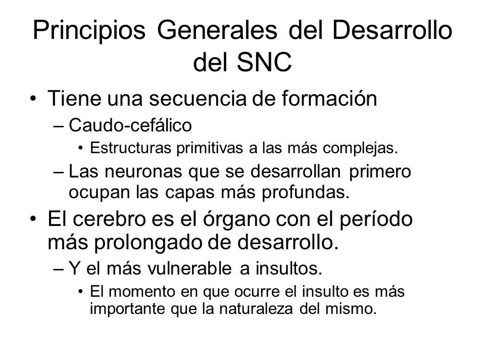 Principios Generales del Desarrollo del SNC