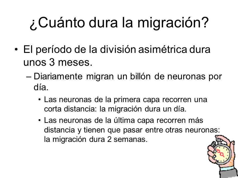 ¿Cuánto dura la migración
