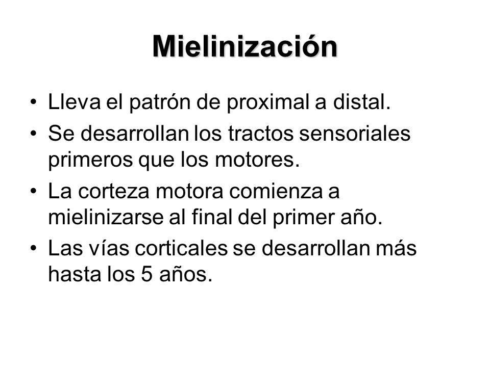 Mielinización Lleva el patrón de proximal a distal.