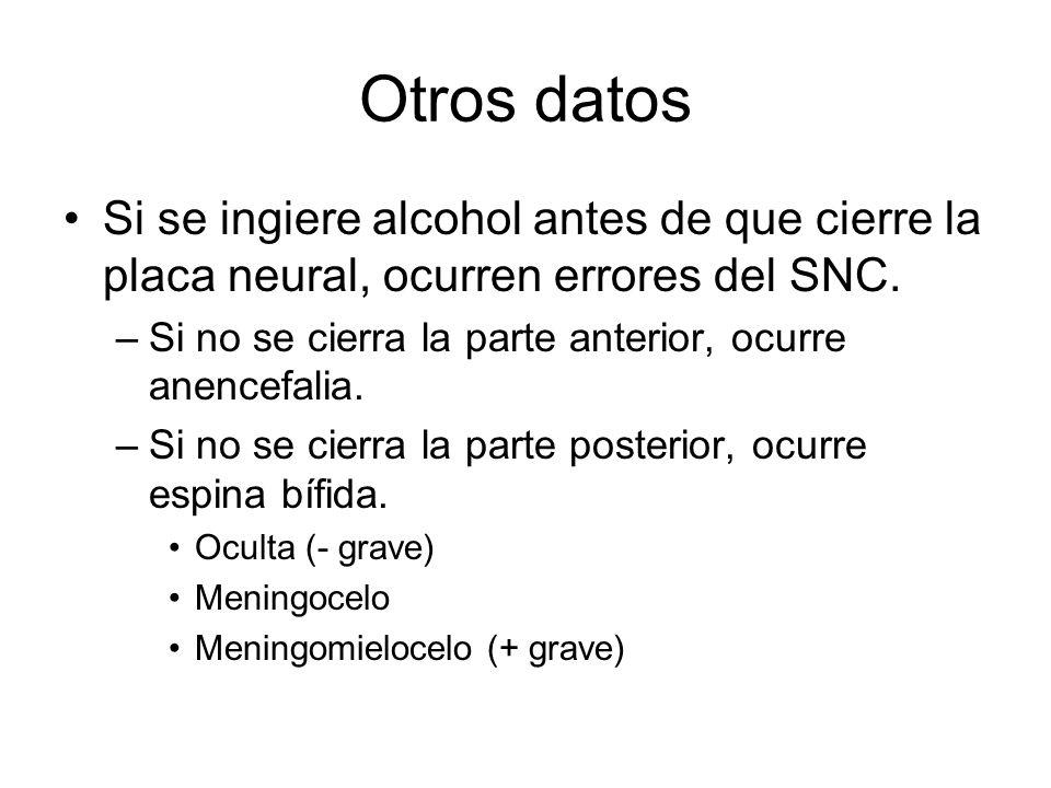 Otros datos Si se ingiere alcohol antes de que cierre la placa neural, ocurren errores del SNC.