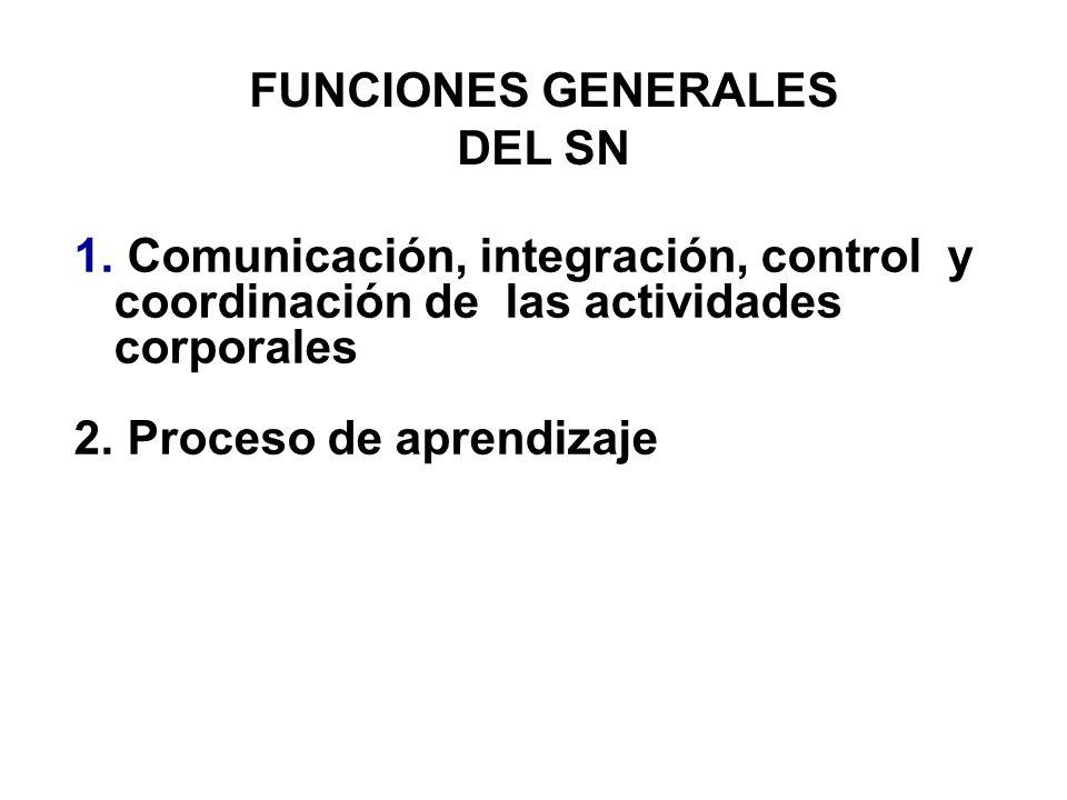 FUNCIONES GENERALES DEL SN. Comunicación, integración, control y coordinación de las actividades corporales.