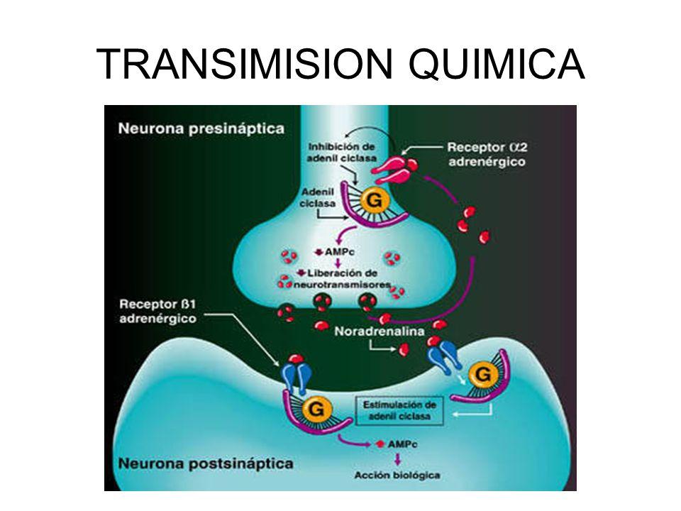 TRANSIMISION QUIMICA