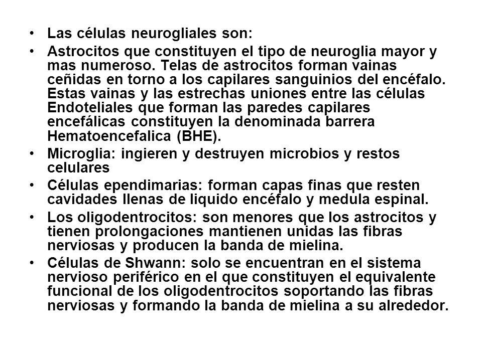 Las células neurogliales son: