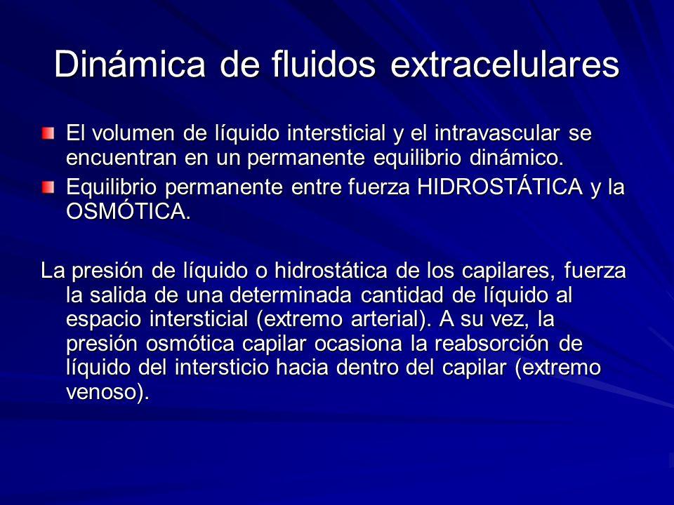 Dinámica de fluidos extracelulares