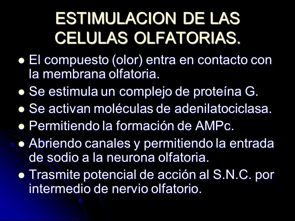 ESTIMULACION DE LAS CELULAS OLFATORIAS.