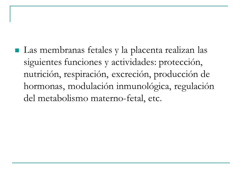 Las membranas fetales y la placenta realizan las siguientes funciones y actividades: protección, nutrición, respiración, excreción, producción de hormonas, modulación inmunológica, regulación del metabolismo materno-fetal, etc.