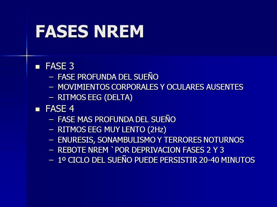 FASES NREM FASE 3 FASE 4 FASE PROFUNDA DEL SUEÑO