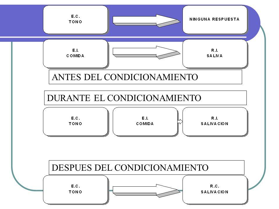 ANTES DEL CONDICIONAMIENTO
