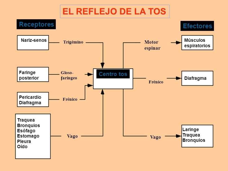 EL REFLEJO DE LA TOS Receptores Efectores Centro tos Motor espinar