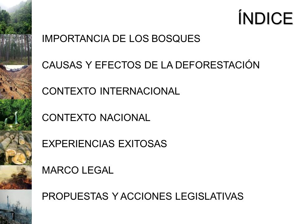 ÍNDICE IMPORTANCIA DE LOS BOSQUES CAUSAS Y EFECTOS DE LA DEFORESTACIÓN