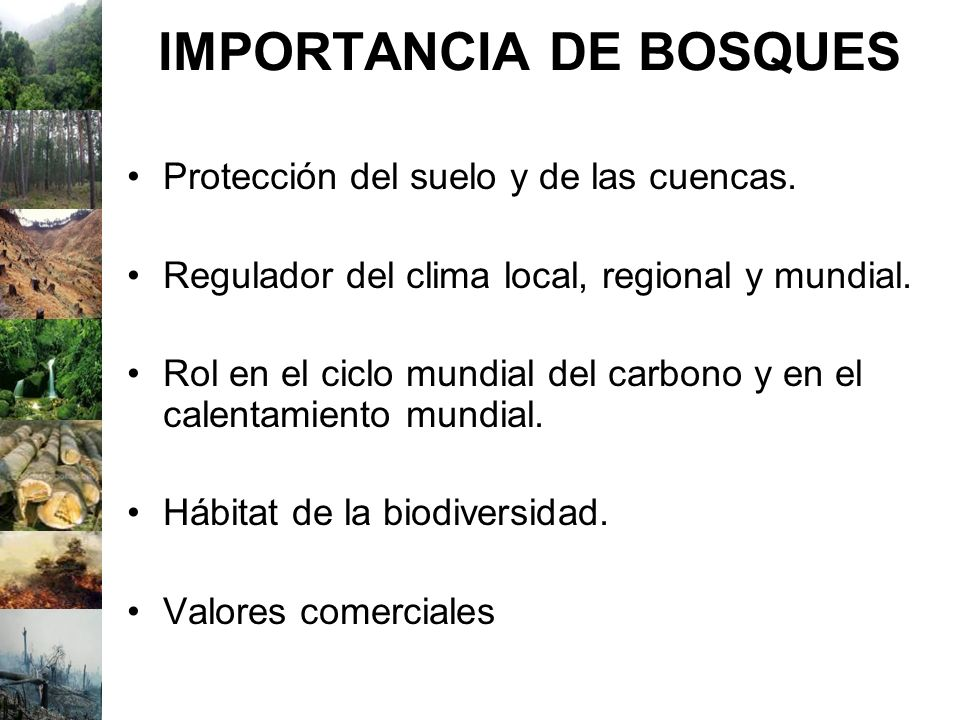 IMPORTANCIA DE BOSQUES