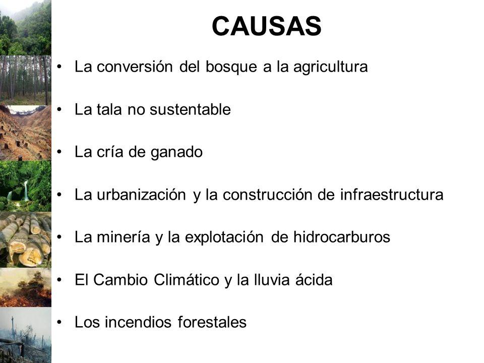 CAUSAS La conversión del bosque a la agricultura