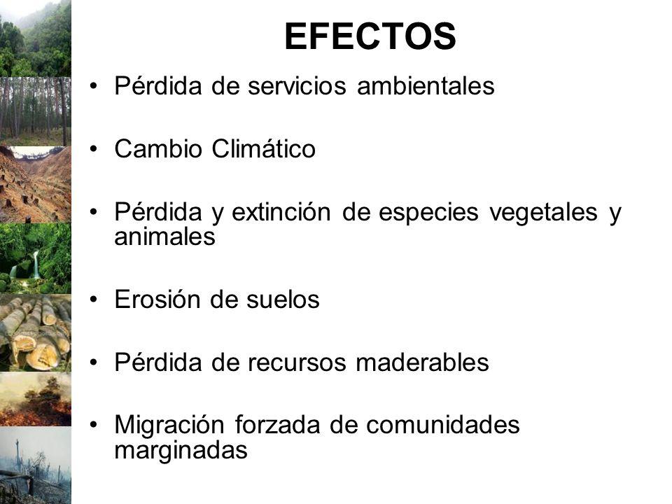 EFECTOS Pérdida de servicios ambientales Cambio Climático