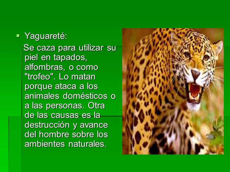 Yaguareté: