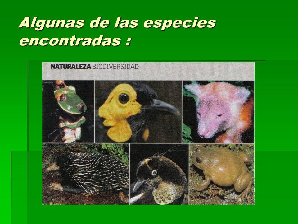 Algunas de las especies encontradas :