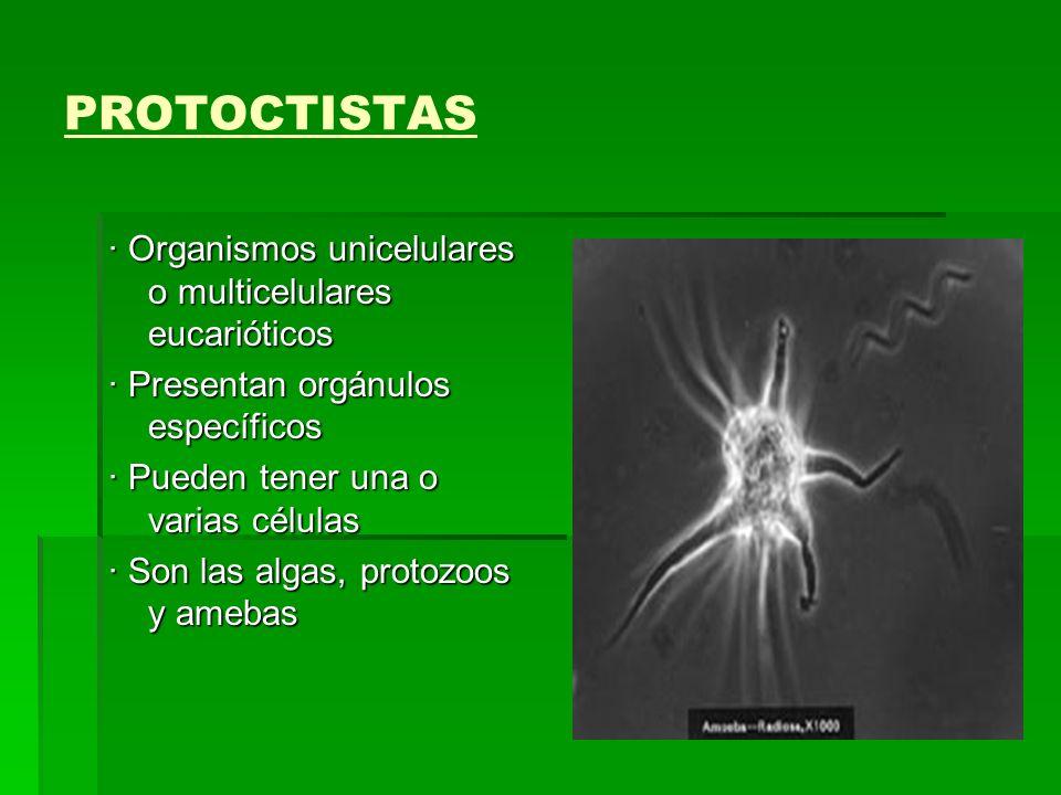 PROTOCTISTAS · Organismos unicelulares o multicelulares eucarióticos