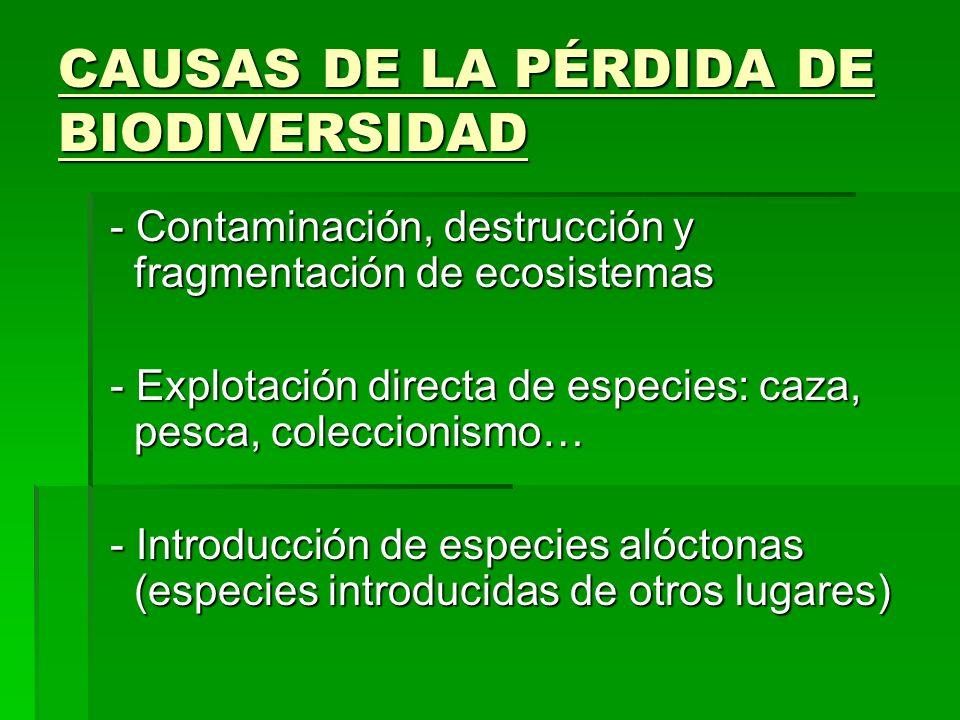 CAUSAS DE LA PÉRDIDA DE BIODIVERSIDAD