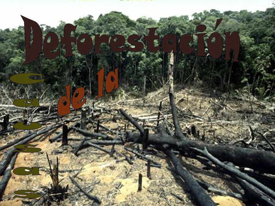 Deforestación de la Causas