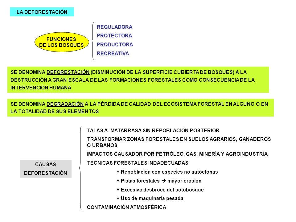LA DEFORESTACIÓNREGULADORA. PROTECTORA. PRODUCTORA. RECREATIVA. FUNCIONES. DE LOS BOSQUES.