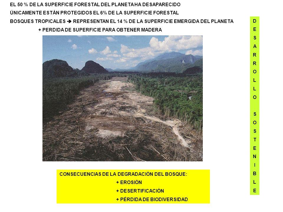 EL 50 % DE LA SUPERFICIE FORESTAL DEL PLANETA HA DESAPARECIDO
