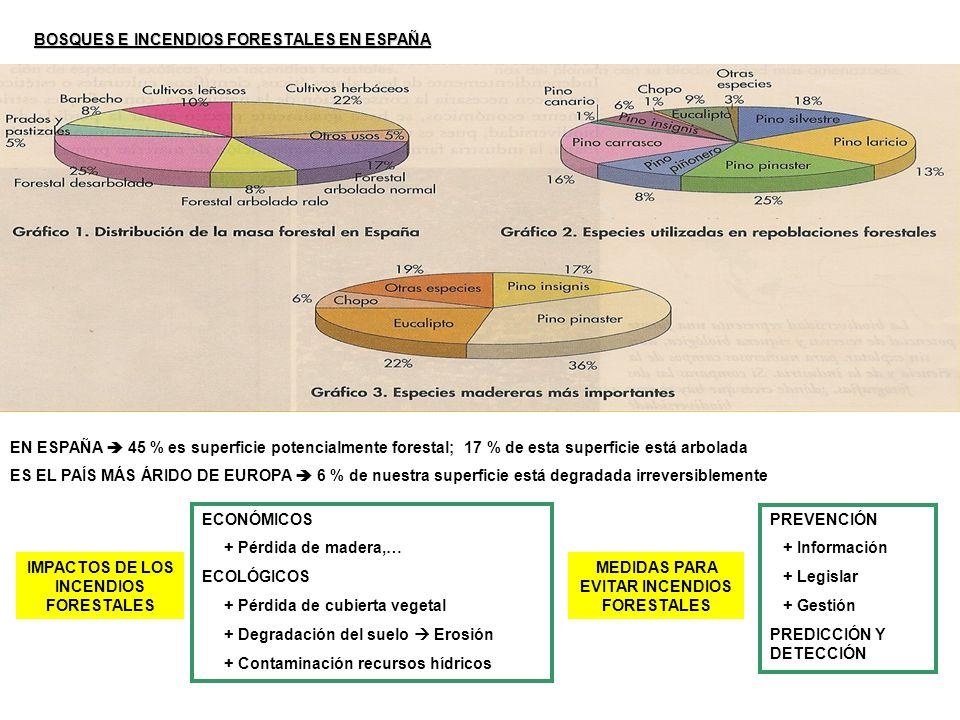 BOSQUES E INCENDIOS FORESTALES EN ESPAÑA