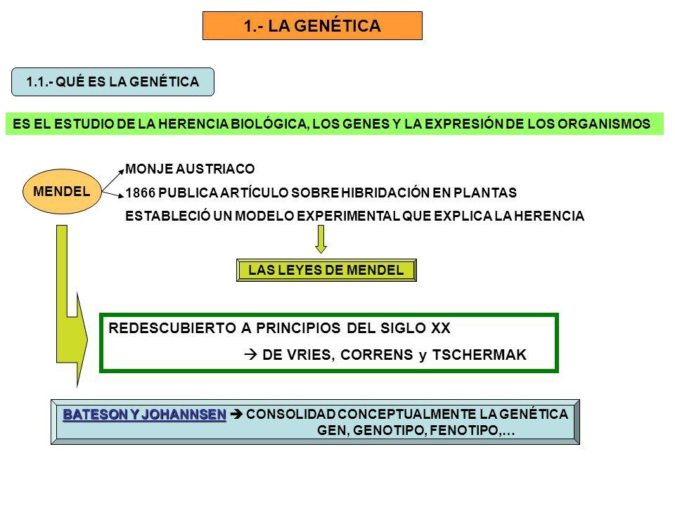 1.- LA GENÉTICA REDESCUBIERTO A PRINCIPIOS DEL SIGLO XX