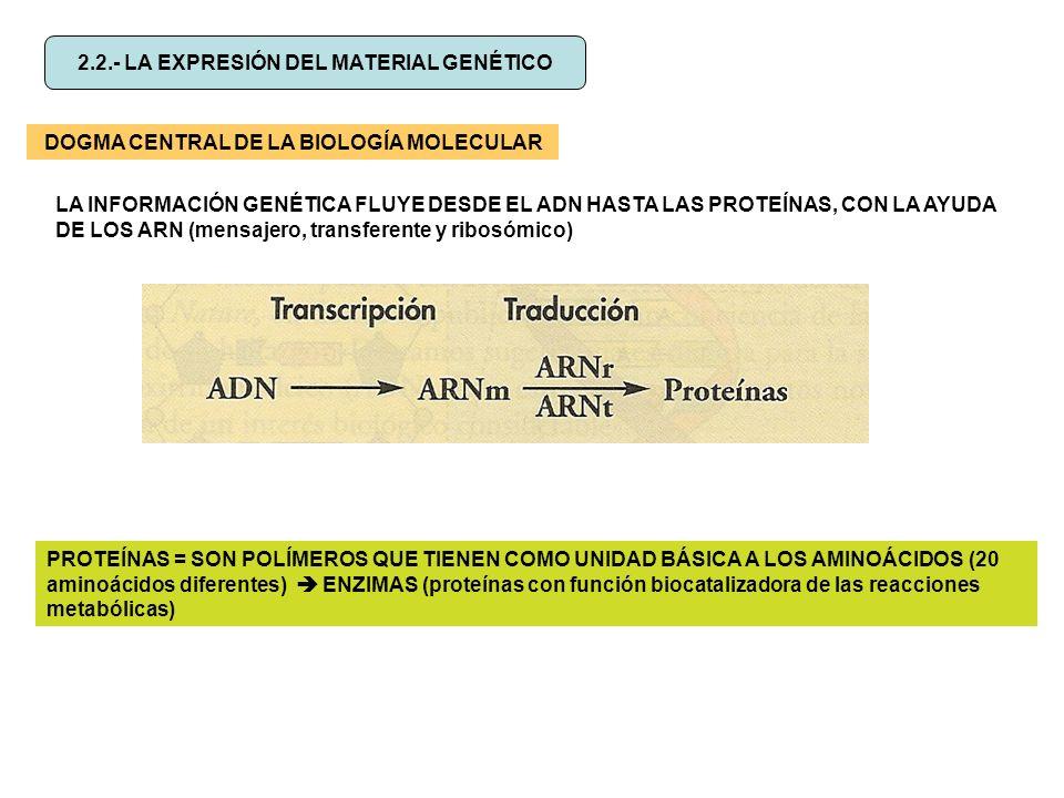 2.2.- LA EXPRESIÓN DEL MATERIAL GENÉTICO