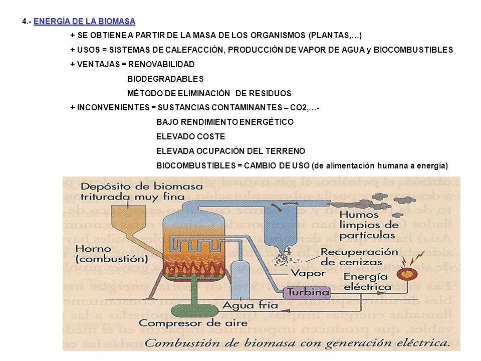 4.- ENERGÍA DE LA BIOMASA + SE OBTIENE A PARTIR DE LA MASA DE LOS ORGANISMOS (PLANTAS,…)