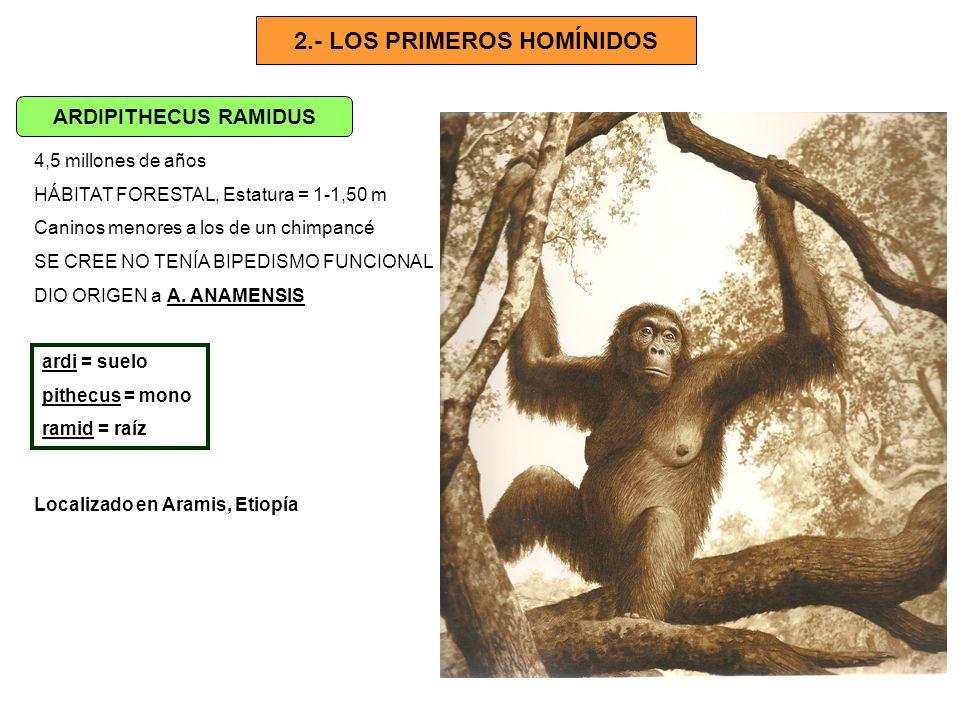 2.- LOS PRIMEROS HOMÍNIDOS