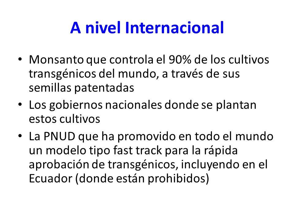 A nivel Internacional Monsanto que controla el 90% de los cultivos transgénicos del mundo, a través de sus semillas patentadas.