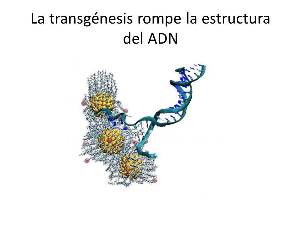 La transgénesis rompe la estructura del ADN