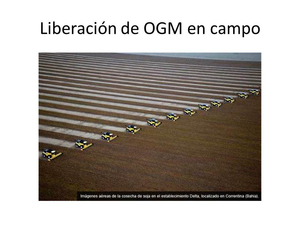 Liberación de OGM en campo